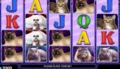 Imagem do jogo caça-níqueis online 100 Cats sem depósito