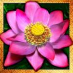 Símbolo especial do caça-níqueis online Thai Flower
