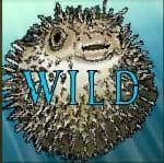 Símbolo curinga do caça-niqueis de cassino grátis Ocean Treasure