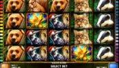 Jogue o jogo caça-níqueis grátis Golden Acorn