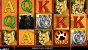 Jogo sem depósito Cats Royal online
