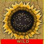 Símbolo Curinga do jogo grátis de cassino Desert Kingdom